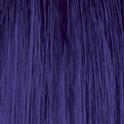 Violet Stargazer